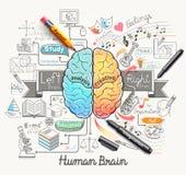 De menselijke stijl van de krabbelspictogrammen van het hersenendiagram stock illustratie