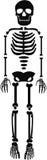 De menselijke Vector van het skeletmalplaatje Stock Fotografie