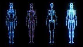 De menselijke Vrouwelijke Technologie van de de Biologiewetenschap van de Anatomie 3D Animatie royalty-vrije illustratie