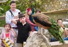 De mensen bekijken pauw in Kuala Lumpur-vogelpark Stock Foto's