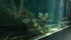 De mensen bekijken vissen bij oceanarium stock videobeelden