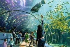 De mensen bevinden zich in ontzag in een tunnel van plexiglas die Overzeese schepselen tonen bij het aquarium de V.S. van Georgië stock fotografie