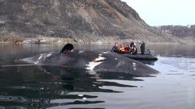 De mensen in boot dichtbij de grote walvis liggen volkomen in water van het Noordpoolgebied stock videobeelden