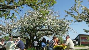 De mensen die onder bloeiende appel zitten proberen genieten van de lente stock videobeelden