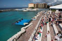 De mensen die op Dolfijn letten tonen bij het Curacao Aquarium Stock Afbeelding