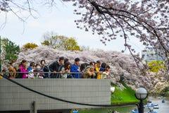 De mensen genieten kersen van bloesems bij het park stock foto