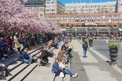 De mensen genieten van lunchtijd onder tot bloei komende kersenbomen in Kungstradgarden in Stockholm, Zweden Royalty-vrije Stock Foto