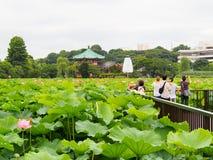 De mensen genieten van nemend foto bij lotusbloemvijver in Ueno-park Royalty-vrije Stock Foto