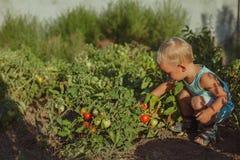 de mensen kweken natuurvoeding stock afbeeldingen