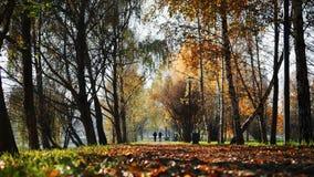 De mensen lopen langs een weg in de herfstpark in de afstand 4K stock footage