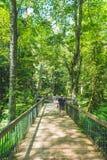 De mensen lopen op houten brug in het botanische tuinbos in de zomer Royalty-vrije Stock Fotografie
