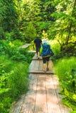 De mensen lopen op houten brug in het botanische tuinbos in de zomer Stock Foto