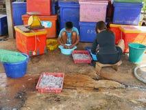 De mensen maken de pijlinktvis schoon wordt gewassen om voorbereidingen treffen om de zon te nemen die Stock Foto's
