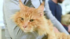De mensen met huisdieren wachten op algemeen medisch onderzoek stock videobeelden