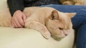 De mensen met hun huisdieren wachten op een algemeen medisch onderzoek bij de veterinaire kliniek stock video