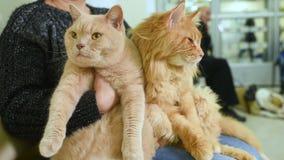 De mensen met hun huisdieren wachten op een algemeen medisch onderzoek bij de veterinaire kliniek stock footage