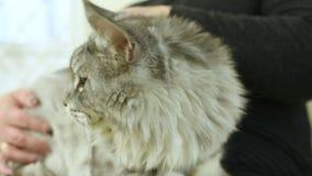 De mensen met hun huisdieren wachten op een algemeen medisch onderzoek bij de veterinaire kliniek Diergezondheid stock video