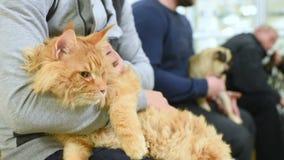 De mensen met hun huisdieren wachten op een algemeen medisch onderzoek bij de veterinaire kliniek Diergezondheid stock footage