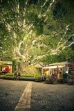De mensen ontspannen onder de grote boom met licht Royalty-vrije Stock Foto