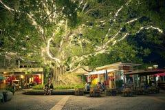 De mensen ontspannen onder de grote boom met licht Royalty-vrije Stock Foto's