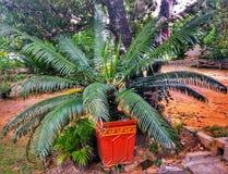 de mensen planten een palm royalty-vrije stock foto's