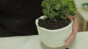 De mensen` s handen planten groene cactus stock videobeelden