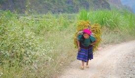 De mensen van de H'mongetnische minderheid dragen droge bomen royalty-vrije stock foto's