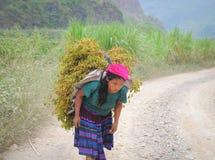 De mensen van de H'mongetnische minderheid dragen droge bomen stock foto's