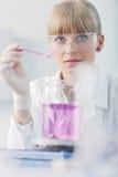 De mensen van het onderzoek en van de wetenschap in labaratory Stock Afbeeldingen