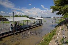 de mensen voeden voedsel aan vissen bij veilig gebied Stock Foto