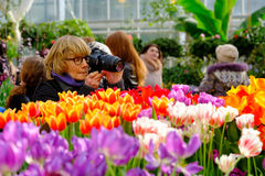 De mensen wonen de markt van de lentebloemen in dagtijd bij Royalty-vrije Stock Foto's