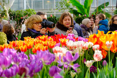 De mensen wonen de markt van de lentebloemen in dagtijd bij Stock Afbeeldingen