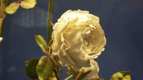 De mensenaard van de bloemwinkel stock footage