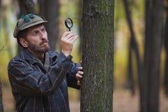 De mensendetective met een baard onderzoekt een boomboomstam Royalty-vrije Stock Foto's