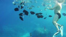 De mensentoeristen duiken van het Jacht onder Water in Rode Overzees, Egypte stock videobeelden