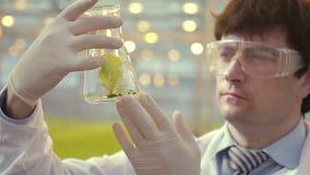 De mensenwetenschapper houdt buis met installatie binnen in handen Biologentribunes in serre stock footage