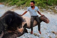 De mensenzitting van olifants moedige mahout op olifantsboomstam in Jim Corbett National Park, India op 10 20 2017 royalty-vrije stock fotografie