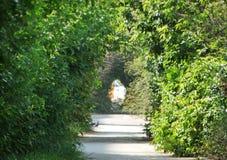 De met elkaar verbindende kronen van de bomen vormen een tunnel Royalty-vrije Stock Fotografie