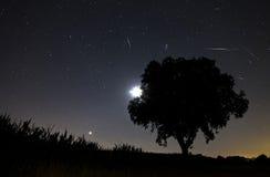 De meteoordouche van Perseids Royalty-vrije Stock Fotografie