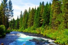 De Metolius-rivier stelt thur een weelderig bos in werking Royalty-vrije Stock Foto's