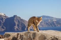 De miauwen van een gestreepte katkat Santorini Griekenland stock foto