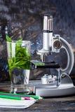 De microscoop van kinderen in de bladeren van de stillevenlijst, installatie, gebladerte, biologie, potloden, notitieboekje royalty-vrije stock afbeelding