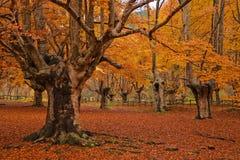 De middag van de herfst bij bos royalty-vrije stock afbeelding