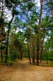 De middag van de zomer in een bos Stock Foto