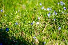 De middag van de graszomer, close-up Natuurlijke Textuur royalty-vrije stock afbeelding