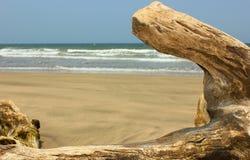De middag van het strandlogboek Stock Fotografie