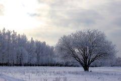 De middag van de winter royalty-vrije stock afbeeldingen