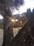 De middagzonneschijn van de katapultboom royalty-vrije stock fotografie