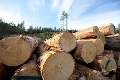 De middelen van het hout royalty-vrije stock afbeeldingen