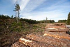 De middelen van het hout stock foto's